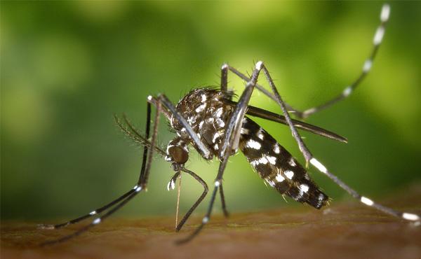 やすい 特徴 に 人 刺され 蚊